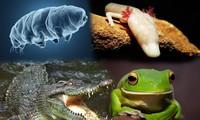 1001 thắc mắc: Loài động vật nào có thể nhịn ăn tới 30 năm?