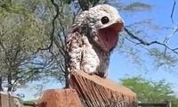 Tưởng mảnh gỗ lạ lùng, người phụ nữ giật mình khi phát hiện chim ma