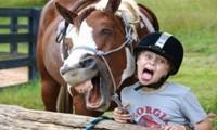 1001 thắc mắc: Loài vật nào có khuôn mặt biểu cảm nhất hành tinh?