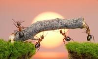 1001 thắc mắc: Một con kiến có thể sống sót nếu rơi từ nóc nhà cao ốc hay không?