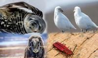 1001 thắc mắc: Loài động vật nào chống chọi được nhiệt độ lạnh tới -150°C?