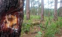 Cả khu rừng bị ken cây, đầu độc bằng hóa chất