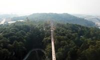 Cây cầu dài hun hút xây không phép