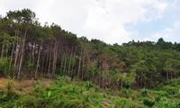 Tiểu khu 289, nơi anh Tuấn đi săn