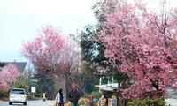 Rực rỡ sắc xuân, tiễn biệt mùa đông - ảnh Võ Trang
