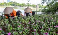 Hồ Hoàn Kiếm gọn gàng, sẵn sàng đón ngày Quốc khánh