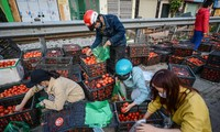 Người dân Thủ đô nườm nượp đến 'giải cứu' nông sản cho Hải Dương