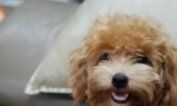 Chú chó cứu mạng cả gia đình trong vụ cháy chung cư Carina Plaza. Ảnh: NVCC