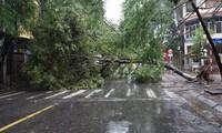 Đường phố Hải Phòng ngập sâu, cây xanh gãy đổ ngổn ngang sau bão