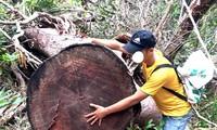Phóng viên Tiền Phong phát hiện cánh rừng ở xã Ia Tul, huyện Ia Pa, Gia Lai bị lâm tặc tàn phá