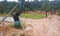 Khu đất hơn 2.000m2 thuộc rừng phòng hộ trên đảo bị san ủi, trồng cây lâu năm. Hiện thủ phạm đã bỏ trốn.