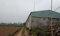Hình ảnh bên trong khu đất rộng 11 ha AVG mua của Cty CP giống tằm Mai Lĩnh.