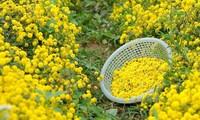 Thị trường ngày 29/11: Sắp thu thuế Youtuber, đặc sản hoa tiến vua gần 1 triệu đồng/kg