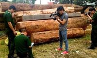 Lực lượng chức năng đo đếm khối lượng gỗ bị cướp năm 2016