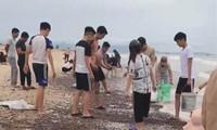 Ốc 'lạ' dạt kín đặc bờ biển Quảng Bình: Chi cục Thủy sản nói gì?