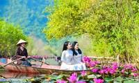Mùa hoa súng ở suối Yến - chùa Hương. Ảnh: Dulichvietnam.com.vn