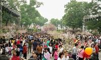 Lễ hội hoa anh đào Nhật Bản-Hà Nội thường phải kéo dài ngày hơn dự kiến do đông người tham quan. Ảnh: Ngọc Châu