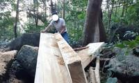 Hiện trường vụ phá rừng tại Kông Chro mà PV báo Tiền Phong phát hiện