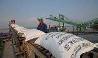 Nhiều DN cho rằng, hạn chế xuất khẩu gạo sẽ khiến họ rơi vào cảnh thua lỗ nặng. Ảnh: Phương Chăm