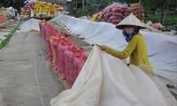 Theo các DN, bán gạo vào thời điểm hiện tại sẽ được giá, như thế DN sẽ có tiền tiếp tục mua lúa giá cao cho nông dân. Ảnh: CẢNH KỲ