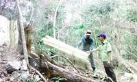 Kiểm lâm Khu BTTN Ea Sô kiểm tra hiện trường phá rừng