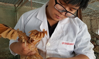 Khóa luận về gà của 9X Việt được trích đăng trên tạp chí ISI