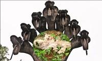 Phát hiện da rắn thần 7 đầu tại đền thiêng Ấn Độ
