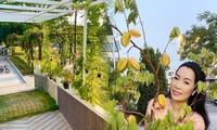 Phát 'sốt' với vườn cây xanh mướt trong biệt thự sang trọng của Trịnh Kim Chi