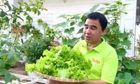Ngưỡng mộ với vườn rau xanh mướt trong biệt thự rộng 500m2 của gia đình Quyền Linh