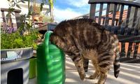 'Cười rớt hàm' trước loạt tư thế quái đản của loài mèo khiến chủ nhân không ít lần hết hồn
