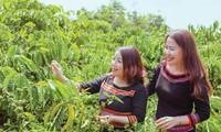 Vườn cà phê hữu cơ của anh Vương nằm trong mô hình du lịch cộng đồng