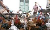 Gà, vịt được bày bán tại chợ Ảnh minh họa