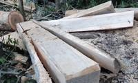 Hiện trường cánh rừng phòng hộ đầu nguồn ở Kông Chro (Gia Lai) bị hạ sát Ảnh: Lê Tiền
