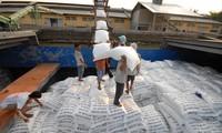 Xuất khẩu gạo gặp khó khăn, nông dân là người chịu thiệt nhiều nhất Ảnh: P.A