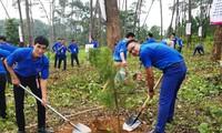Anh Vi Văn Mạnh (bên trái) trồng cây tại khu Di tích Ðá chông K9, Ba Vì, Hà Nội. Ảnh: NVCC