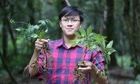 Anh Trần Ðức An khởi nghiệp với sâm Ngọc Linh. Ảnh:NVCC