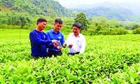 Cán bộ Tỉnh đoàn Nghệ An, Tổng đội TNXP 5 kiểm tra cây trồng chủ lực của các hộ đội viên
