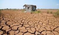 Khô hạn, mặn xâm nhập tăng cao khiến khu vực Đồng bằng sông Cửu Long bị tổn thương nghiêm trọng ẢNH: Anh Tuấn