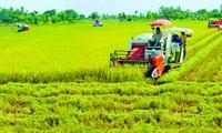Nâng cao phẩm cấp gạo Việt là hướng đi ưu tiên của ĐBSCL