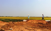 Vụ lúa cuối cùng trên đồng ruộng Hương Sơ. Nơi này sẽ là một phần của khu tái định cư dân Thượng thành
