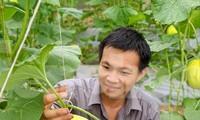 Anh Nguyễn Thanh Liêm chăm sóc dưa lưới