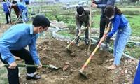 Đoàn viên thanh niên Thanh Hóa trồng cây tại xã Cẩm Quý, huyện Cẩm Thủy