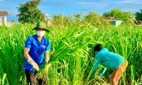 Đoàn thanh niên xã Ea Wer cắt cỏ cho bò, hỗ trợ người dân đang cách ly