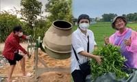 Trường Giang làm phụ hồ, Phương Thanh thu hoạch rau