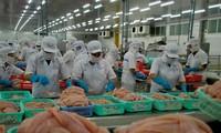 Mỹ trở lại là thị trường số 1 của xuất khẩu cá tra Việt Nam