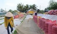 Kiến nghị cho xuất khẩu gạo nếp vì nhu cầu trong nước ít