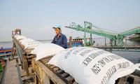 Nhiều doanh nghiệp không kịp trở tay để đăng ký tờ khai hải quan xuất khẩu gạo. Ảnh: CK