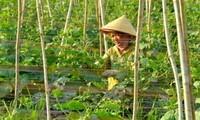 Campuchia cấm nhập khẩu 6 loại nông sản từ Việt Nam