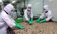 Xuất khẩu tôm sang EU kỳ vọng tăng trưởng nhờ hiệp định EVFTA