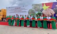 Xuất khẩu lô hàng trái cây sang châu Âu theo hiệp định EVFTA 